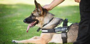 Professioneller Security-Service mit Wachhund