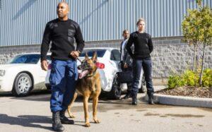 Sicherheitsdienstleistungen mit Wachhund