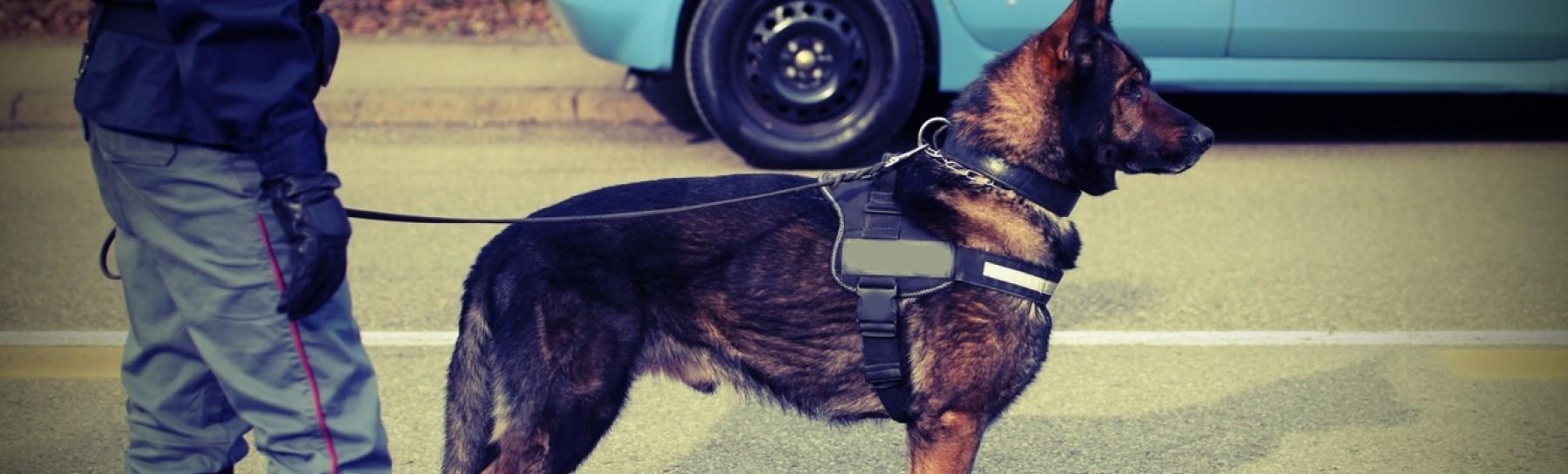 Wachschutz mit Diensthunden: Instinkt für Sicherheit