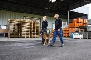 Wachdienst mit Diensthund in Gießen